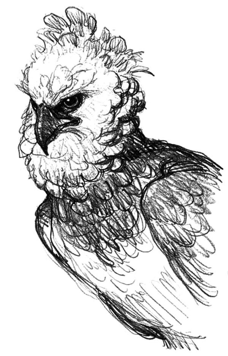 Free Coloring Pages American Bald Eagle