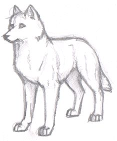 Easy Wolf Drawings in Pencil | Tutoring: Animals