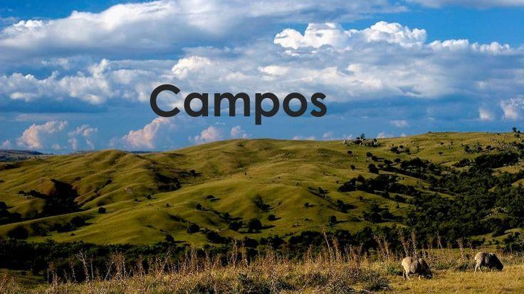 Tudo sobre os Biomas CAMPOS, CERRADO e DESERTOS: localização, características, clima, fauna e flora, adaptações necessárias para a sobrevivência. E ainda: defi…