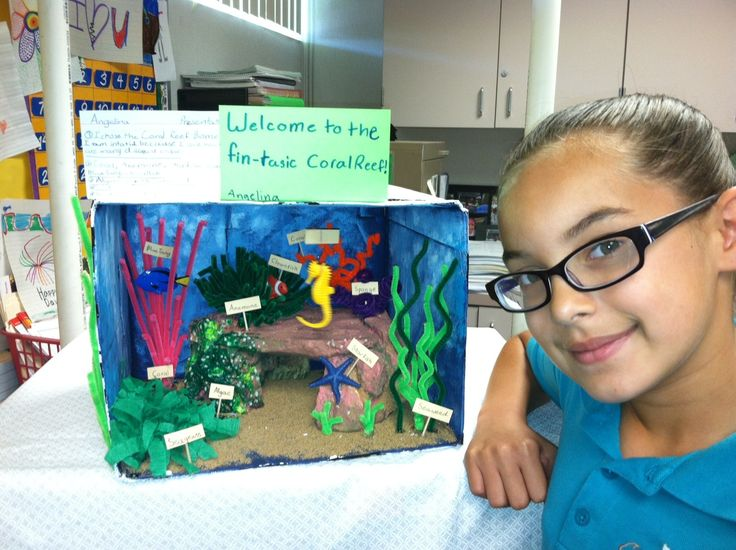 Coral Reef Ecosystem Project: Pinterest Discover And Save