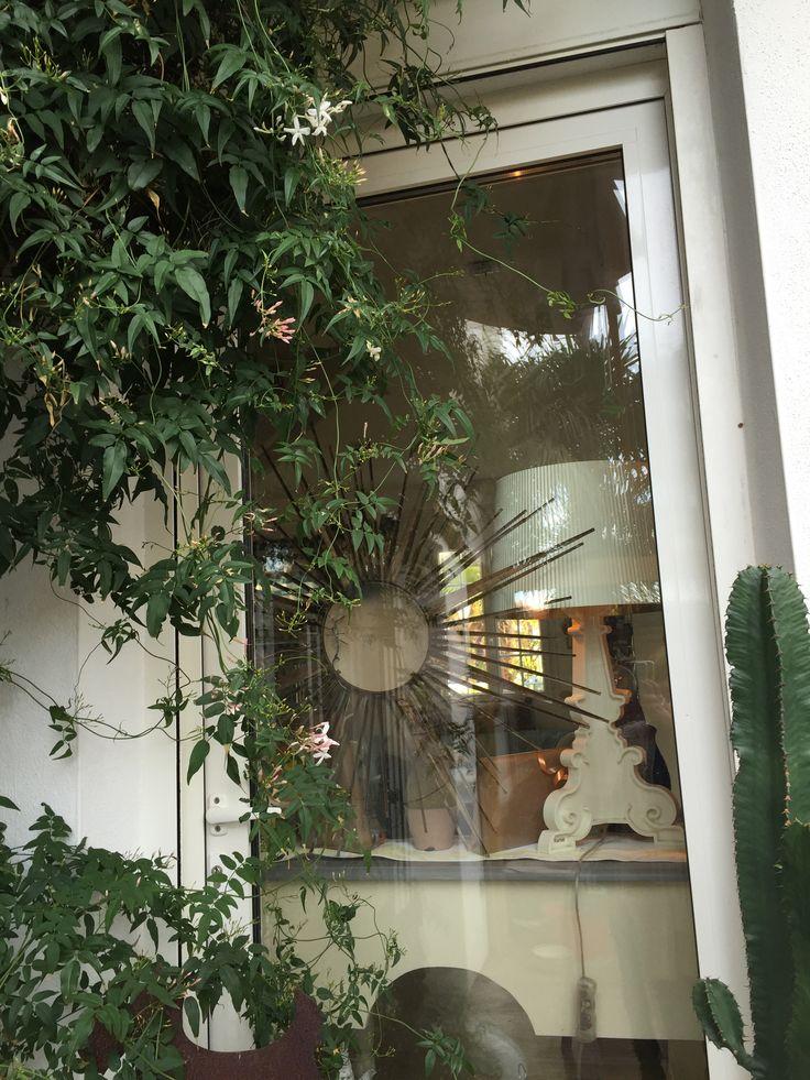 Quand le jasmin est en fleurs à Biarritz
