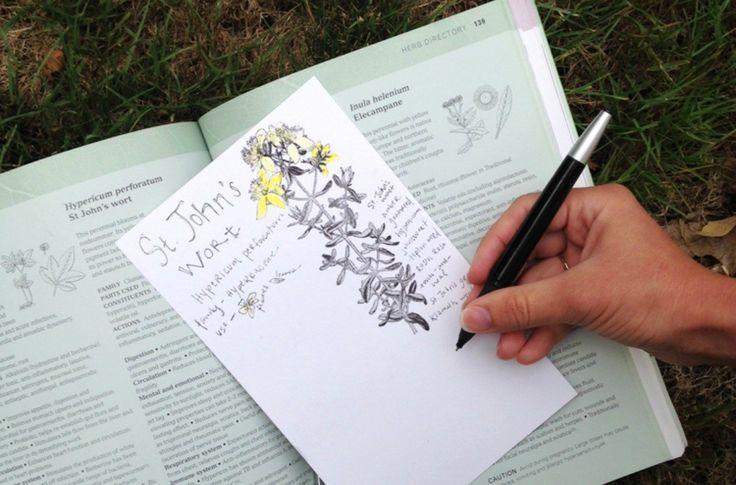 Park Art My WordPress Blog_Herbology For Home Study Pdf