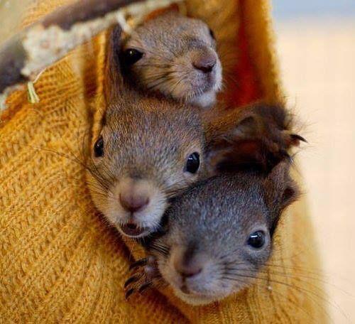 Honey, I love you more than a bag o'squirrels... ~~ Houston Foodlovers Book Club