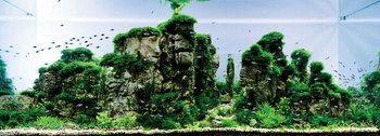 まるで美しい風景を見ているかのよう…水槽の中に広がるアートの世界