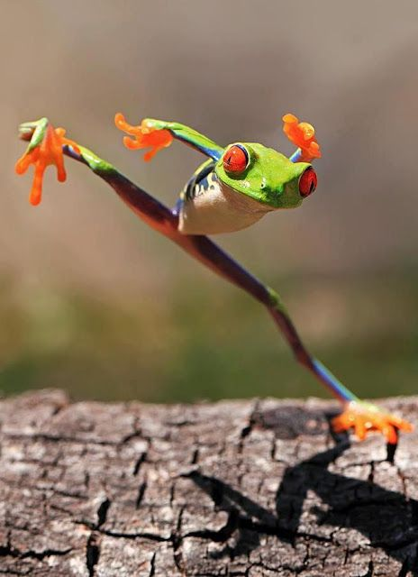 Kung Fu Frog.(Yaaahooo) | See More Pictures | #SeeMorePictures