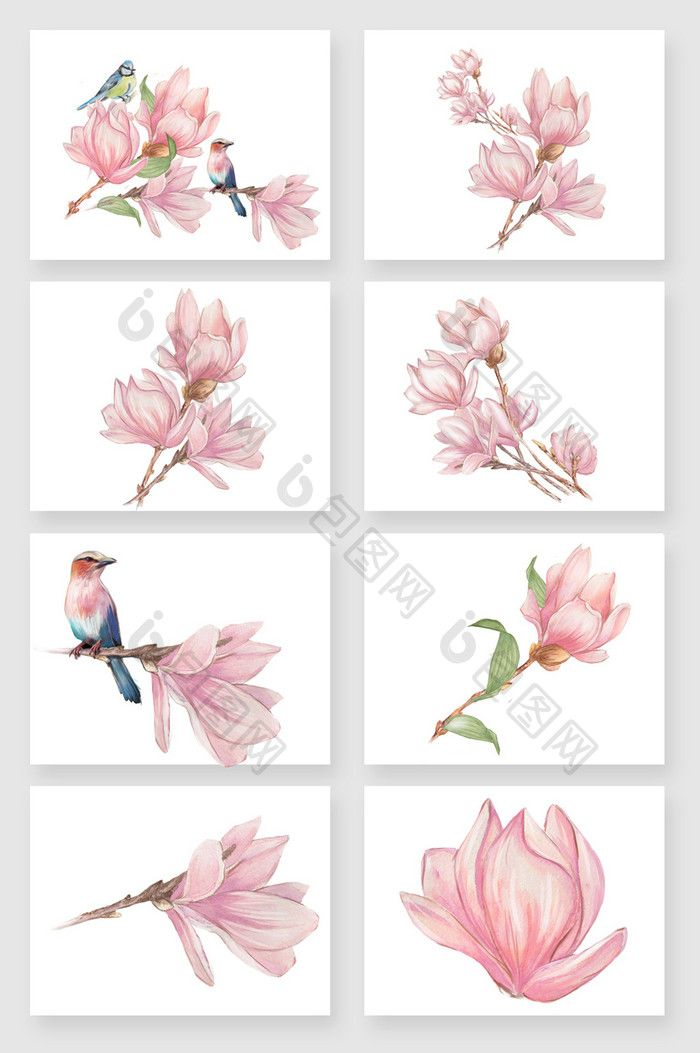 Hand Painted Pink Beautiful Magnolia Flower Vector Material Free