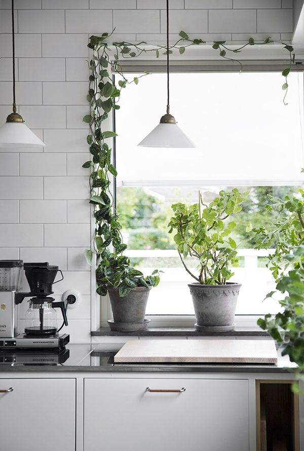 Jag har fått flera frågor om hur jag fäst min växtgardin (som skymtat på Instagram) på vår kaklade köksvägg. Tricket stavas vit eltejp.I alla fall om man inte vill spika i kakel och fönsterlister…