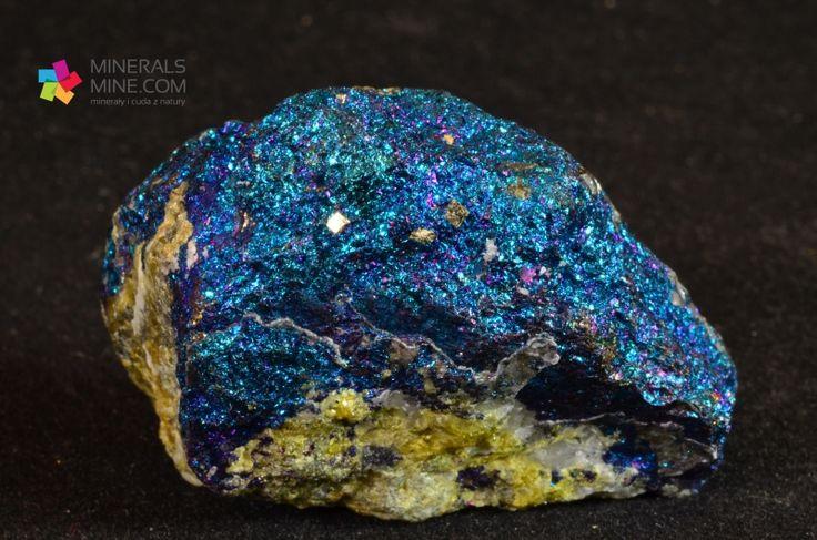 Mieniący się różnymi kolorami chalkopiryt. Znana i ceniona lokalizacja. Pochodzenie: Zacatecas, Meksyk Wymiary: 7.0 X 4.3 X 1.6 cm Waga: 46 g