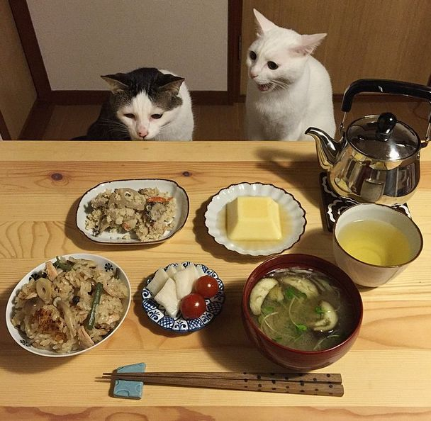 Naomiuno's cats,from Japan...Actually,I don't know what they are thinking while their Dad and Mom dining,do you know?https://instagram.com/naomiuno/