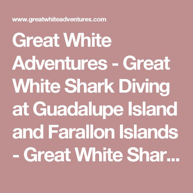 Great White Adventures - Great White Shark Diving at Guadalupe Island and Farallon Islands - Great White Shark Diving Expeditions
