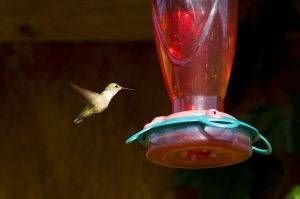 How to Make Hummingbird Food for Feeders