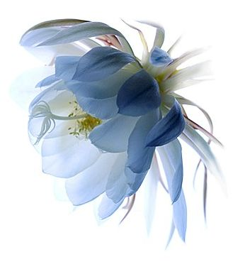 Floranova: photography by Warwick Orme