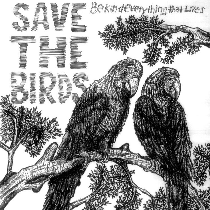 Save The Birds