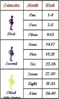 Baby Trimester Chart