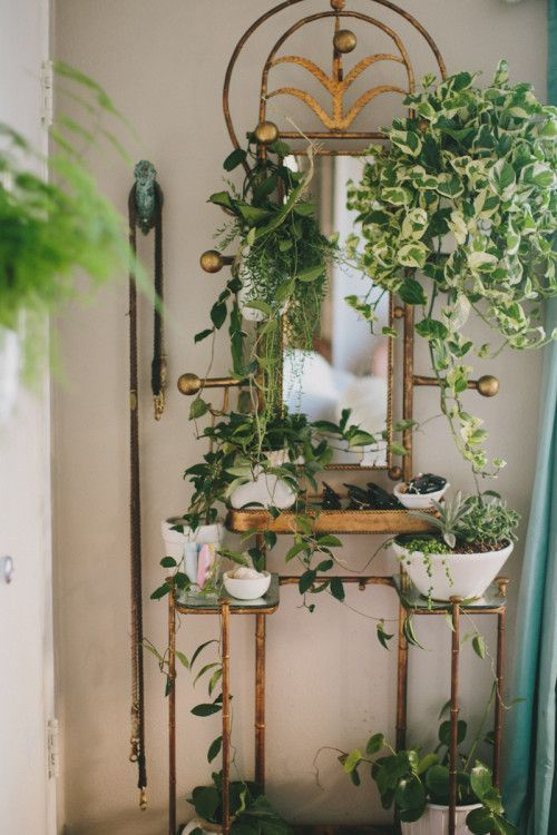 Plant Stands Indoor Living Rooms Houseplant