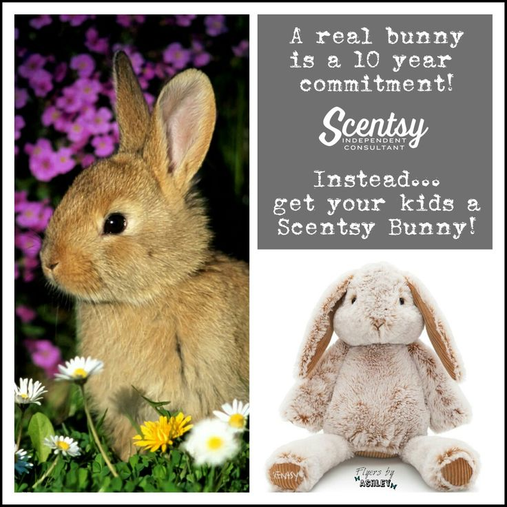 Bailey is ready to hop your way with a free scent pak! #scentsykids #buddylove https://ashtaley.scentsy.ca/