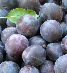 Lovely looking plums and an article about growing your own food.