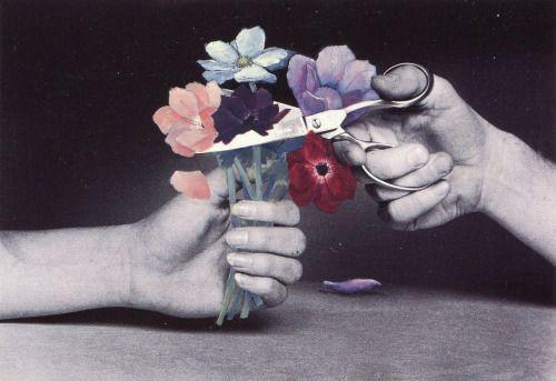 Cut Flowers (1984) –Duane Michals (American, b. 1932)