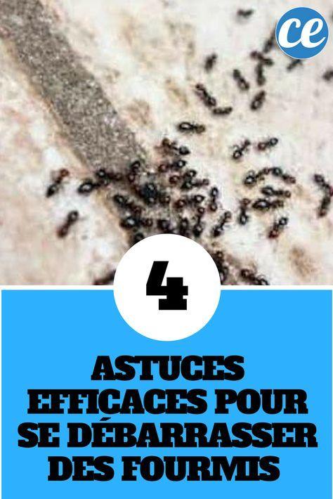 4 astuces efficaces pour se d barrasser des fourmis la. Black Bedroom Furniture Sets. Home Design Ideas