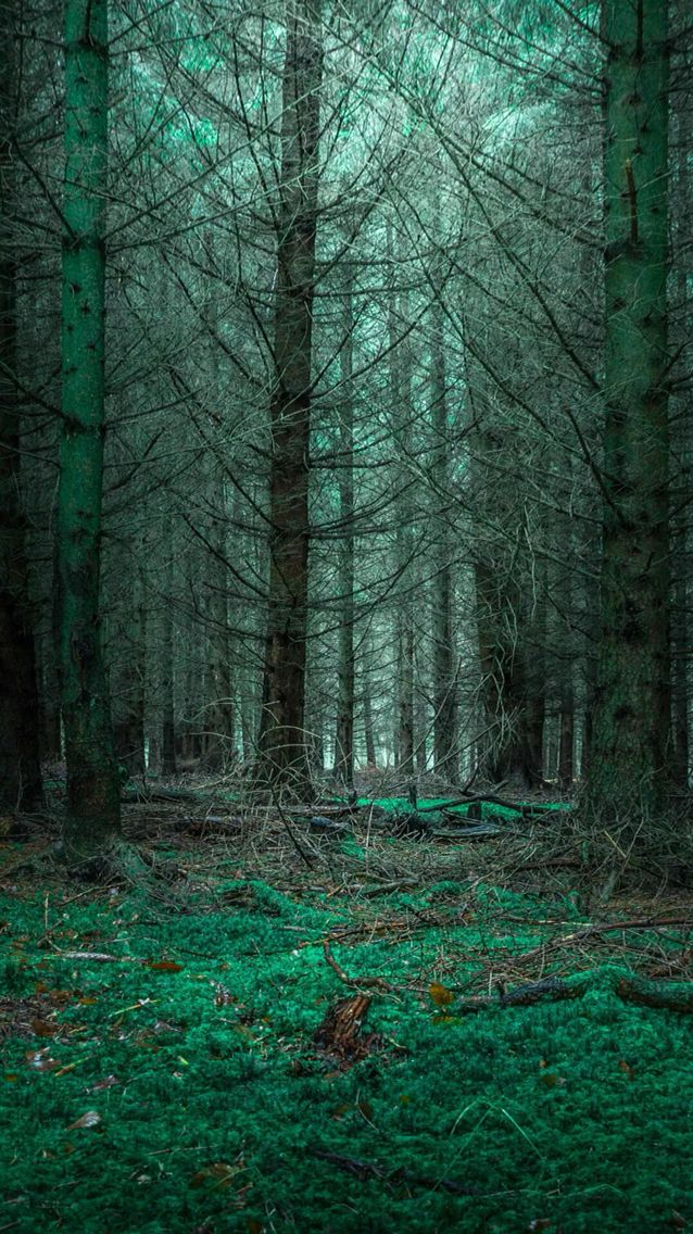 Wallpaper nature mysterious forest Nature iphone
