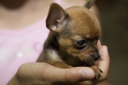 Would LOVE to have a dog! Perhaps a lil' chihuahua...