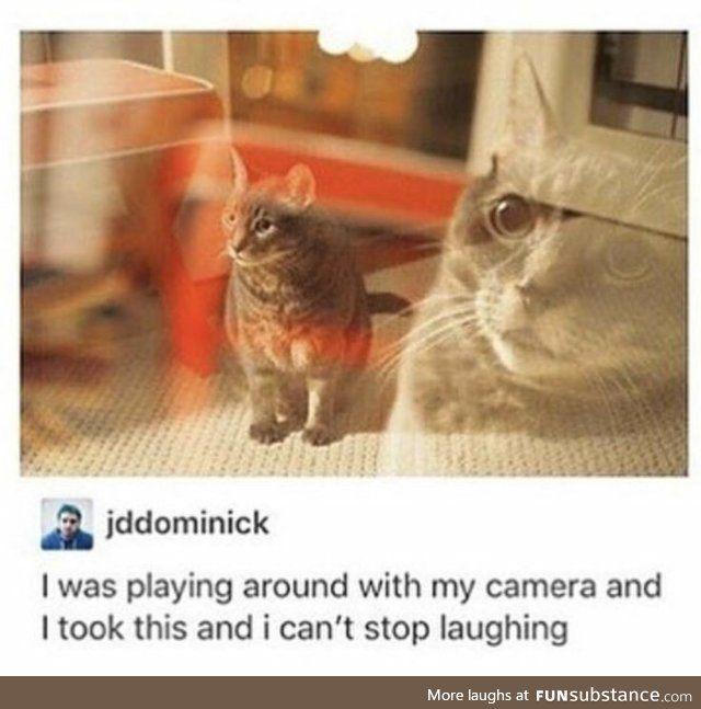 Meow Funsubstance Funny Animal Memes Cute Funny Animals Funny Animals