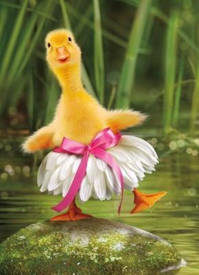 #funny, #duck, #duckling, #dress, #animal, #humor, #cute  —DH Swag: http://www.cafepress.com/tlconline