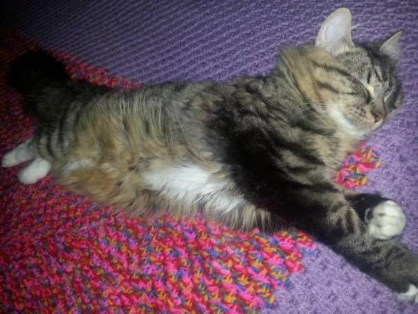 LOST CAT: 04/09/2017 - Taylors Hill, Victoria, VIC, Australia. Ref#: L36403 - #CritterAlert #LostPet #LostCat #MissingCat