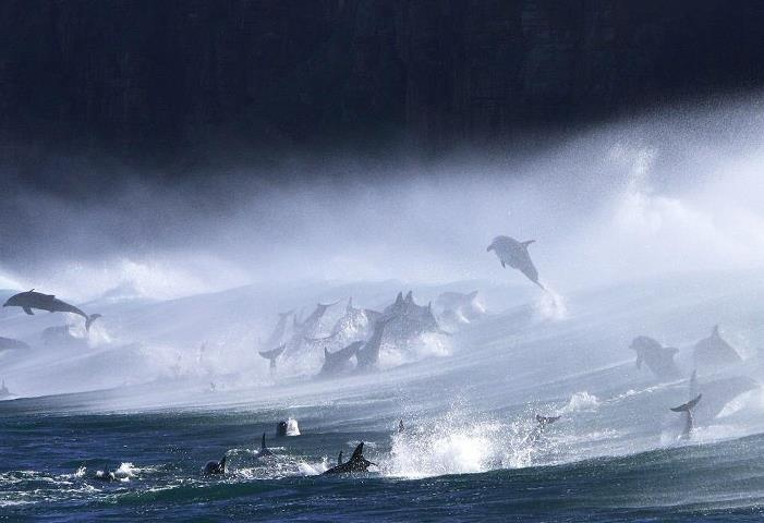 Wow... awesome beautyGod Beautiful, Wow Dolphins, Fuck Perfect, Awesome Beautiful