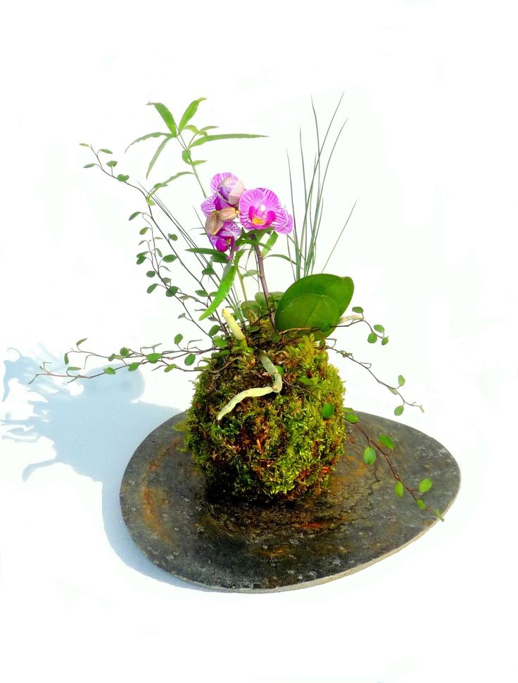 1000 images about kusamono and kokedama on pinterest ferns ceramic planters and trays. Black Bedroom Furniture Sets. Home Design Ideas