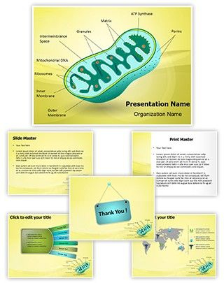 40 best Blood PowerPoint Presentation Templates images on - powerpoint presentation specialist sample resume