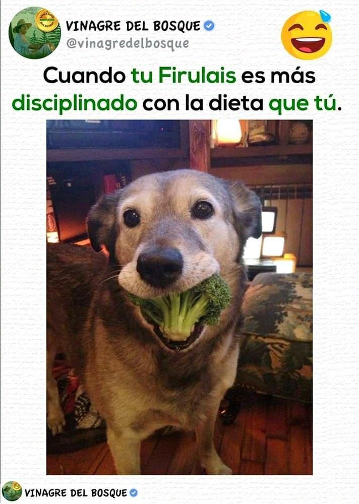 Pin De Arlet Rincon Aguaz En Firulais Funny Memes Divertidos Memes De Animales Divertidos Memes Malos