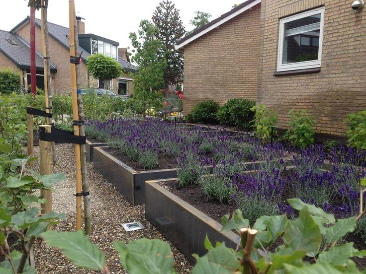 Stalen plantenbakken met lavendel