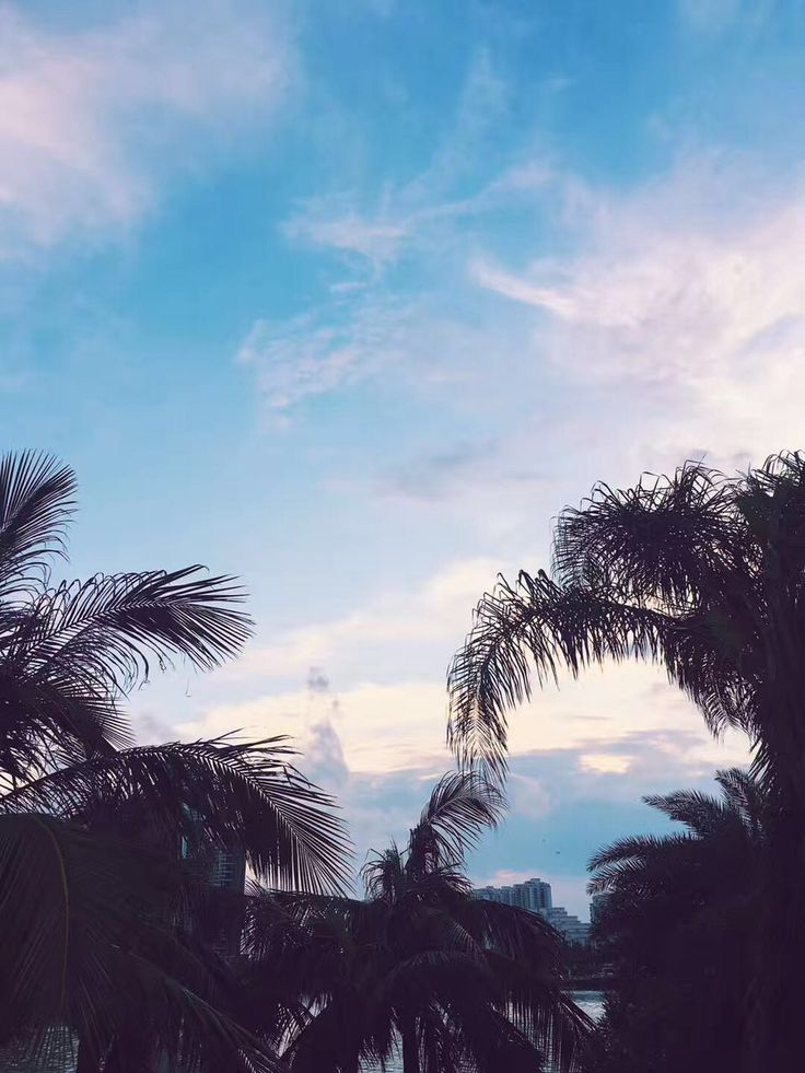 Beautiful Sky's of Zhuhai! Follow the link to find out about Zhuhai's amazing internship programs #intern #china #palmtree #sky #skyporn #photography #travel #travelphotography #study abroad #studychina #nature #beauty #clouds #experience #asia #tropical photoredit instagram @Pointedthought