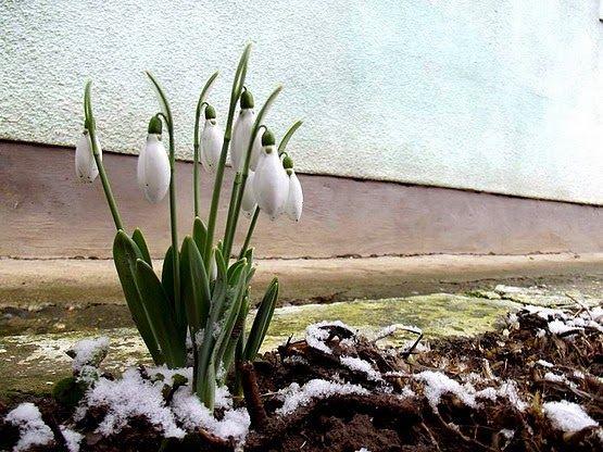 Hóvirágok :)