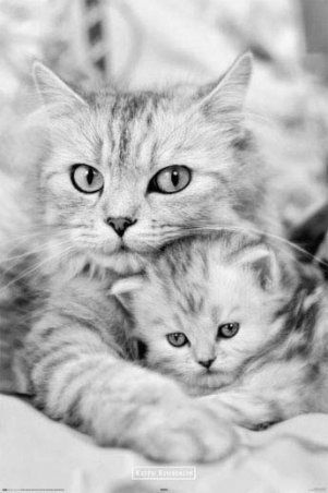A cat and her kitten snuggling up before bed time. In timeless black and white photography, the image depicts the tenderness of a mother's love beautifully as her cute little kitten buries its head in her mothers arms.  Fiercely protective of her child the mother has an intense look in her eyes that warns you not to come too close in this moment of affection.    By Keith Kimberlin