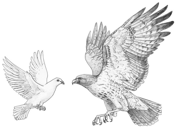 Hawk Drawing 1000 Images About Eagle And Painting On