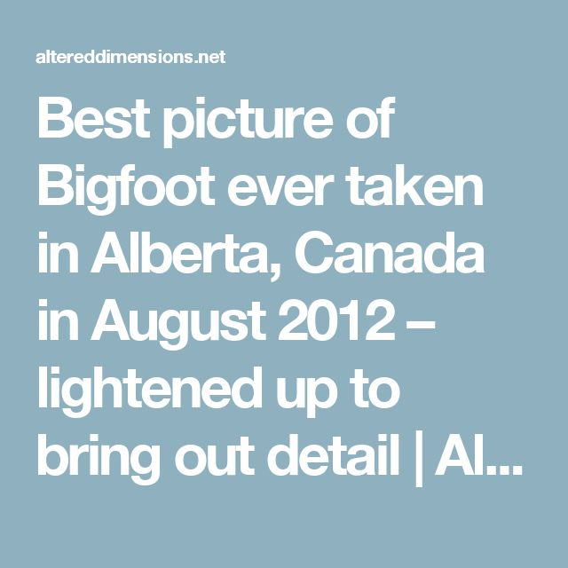 Best picture of Bigfoot ever taken in Alberta, Canada in August 2012 – lightened up to bring out detail | Altered Dimensions Paranormal