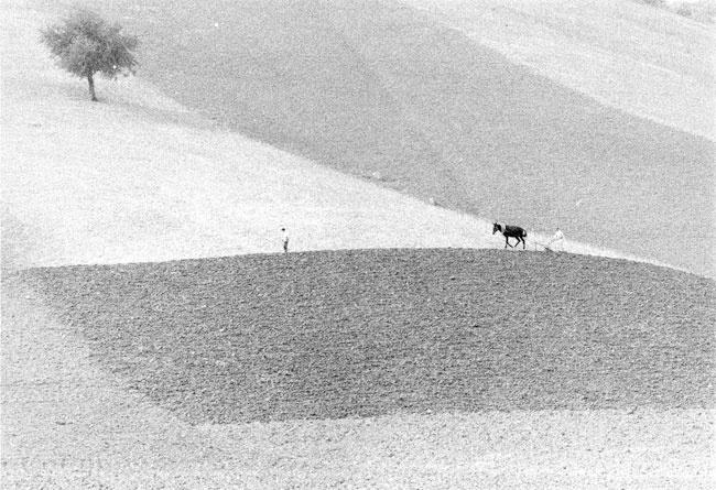 Gianni Berengo Gardin - Toscana, 1958