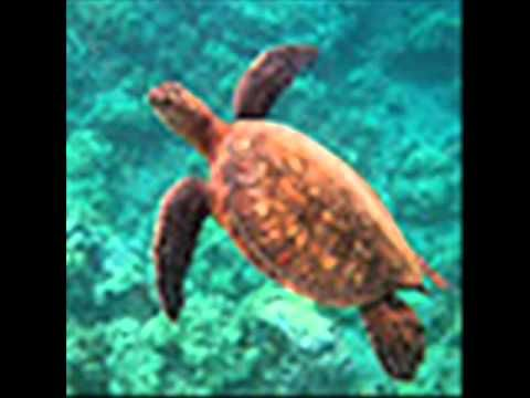 Video~ Educational ocean video for first grade students about the different species that live in the different oceans.
