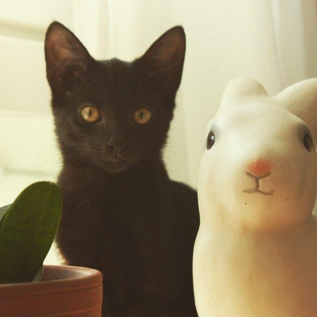 #blackcat #bunnyandfriend #pupulamppu