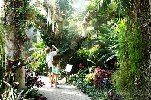 149 Best Images About Plant On Pinterest Forests Hanging Gardens And Tropical Gardens
