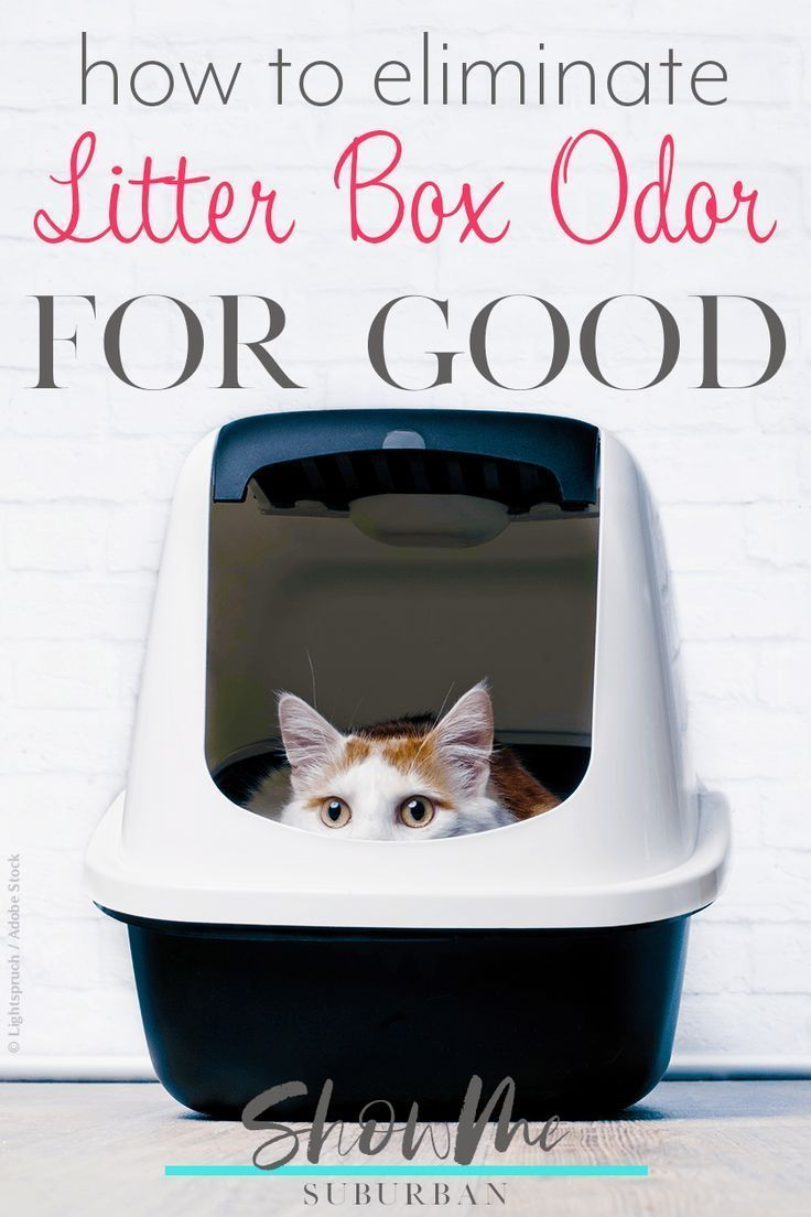How To Eliminate Litter Box Odor For Good Litter Box Smell Cleaning Litter Box Cat Litter Odor