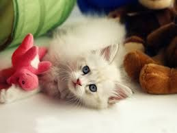 Image result for cute pets