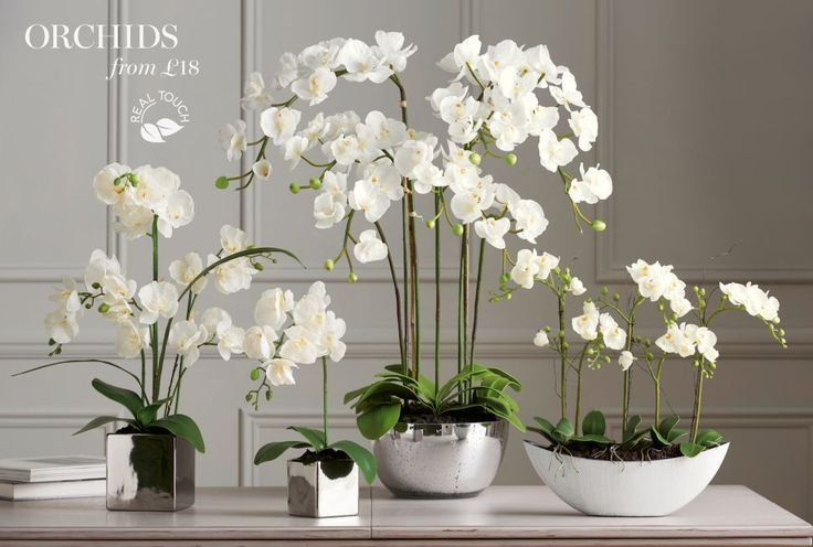 Artificial Flowers   Lighting & Accessories   Home & Furniture   Next Official Site - Page 7