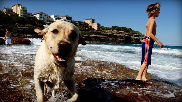 An article about Australia's best dog friendly beaches.