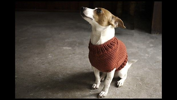 The Juno Jumper - a classic jumper for the four legged friend in your life! Alice Neal for LoveKnitting.com