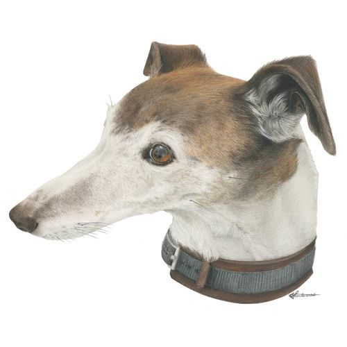 Fox the #whippet #hound: my first commission!