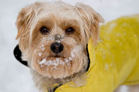 8 Winter Pet Care Tips