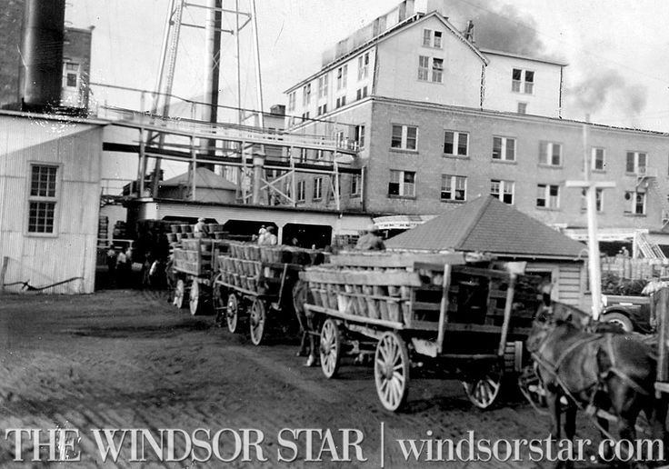 Horse drawn wagons and tomatoes at the Leamington Heinz facility. (The Windsor Star-FILE)